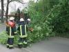 29. April 2013: Umgestürzter Baum